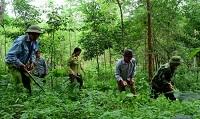 Đối tượng được Nhà nước giao rừng đặc dụng không thu tiền sử dụng