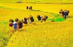 Hạn mức công nhận đất nông nghiệp tự khai khoang trên địa bàn Hà Nội