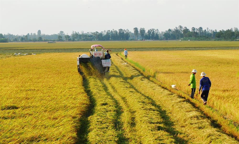 Hỗ trợ địa phương sản xuất lúa
