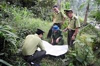 Quy định về kiểm kê rừng