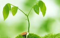 Ký kết, gia nhập điều ước quốc tế về môi trường