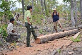 Vi phạm quy định về khai thác gỗ