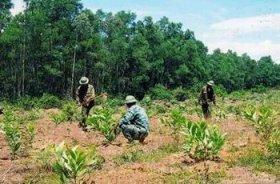 Vi phạm quy định về trồng rừng mới thay thế diện tích rừng  chuyển sang mục đích khác