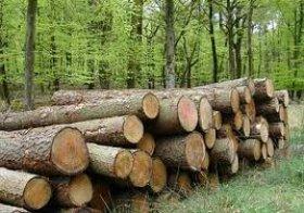 Vi phạm quy định về thiết kế khai thác gỗ
