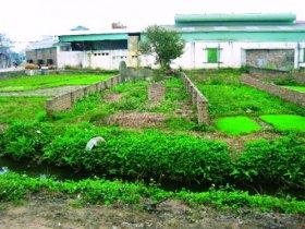 Hạn mức công nhận đất ở đối với thửa đất ở có vườn, ao trên địa bàn Hà Nội