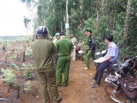 Xử phạt hành vi phá rừng trái pháp luật