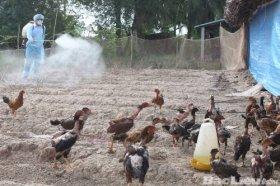 Vi phạm về điều kiện vệ sinh thú y