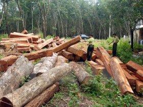 Xử phạt hành vi lấn, chiếm rừng
