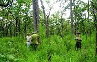 Quy định về phân loại rừng