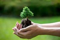 Phát triển dịch vụ môi trường