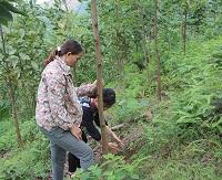 Tiêu chí rừng trồng