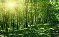 Tiêu chí rừng tự nhiên
