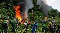 Tổ chức, quản lý lực lượng phòng cháy và chữa cháy rừng