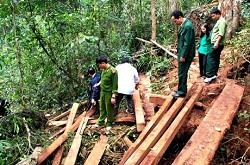 Vi phạm các quy định chung của Nhà nước về bảo vệ rừng
