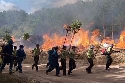 Vi phạm các quy định về phòng cháy, chữa cháy rừng
