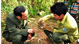 Vi phạm các quy định về quản lý, bảo vệ động vật rừng
