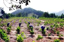 Vi phạm quy định của Nhà nước về trồng rừng