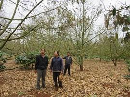 Vi phạm quy định về phòng trừ sinh vật hại rừng
