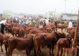 Vi phạm quy định về thủ tục kiểm dịch động vật