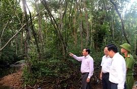 Vi phạm thủ tục hành chính trong quản lý rừng, chế biến, kinh doanh lâm sản