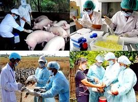 Vi phạm về chống dịch bệnh động vật trên cạn