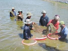 Vi phạm về phòng bệnh, chống dịch bệnh động vật thủy sản