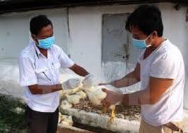 Vi phạm về phòng bệnh, chữa bệnh động vật trên cạn