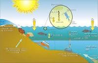 Xác định thiệt hại do ô nhiễm, suy thoái môi trường