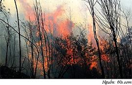 Xử phạt hành vi phá hủy các công trình phục vụ việc bảo vệ và phát triển rừng