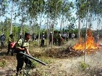 Yêu cầu về phòng cháy đối với dự án phát triển rừng