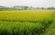 Có thể gộp đất nông nghiệp vào đất ở không?