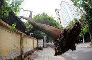 Bảo đảm an toàn trong trường hợp cây cối có nguy cơ gây thiệt hại