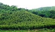 Các giấy tờ để được chứng nhận quyền sở hữu rừng sản xuất là rừng trồng