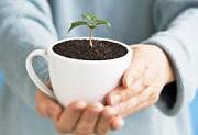 Căn cứ bắt buộc chuyển giao quyền sử dụng giống cây trồng