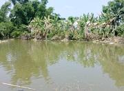Chuyển đất trồng lúa sang đất nuôi trồng thủy sản mà không xin phép