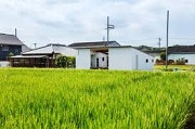 Chuyển đất trồng lúa sang đất phi nông nghiệp mà không xin phép bị phạt thế nào?