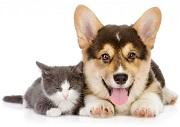 Có cấm nuôi chó, mèo ở chung cư không?