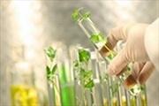 Điều kiện cấp chứng chỉ hành nghề dịch vụ đại diện quyền đối với giống cây trồng