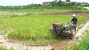 Lấn, chiếm đất trồng lúa bị phạt bao nhiêu từ 2020?