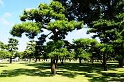Muốn chứng nhận quyền sở hữu cây lâu năm thì cần những loại giấy tờ gì?