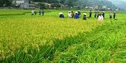 Nhận chuyển quyền sử dụng đất nông nghiệp vượt hạn mức quy định