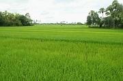 Nhận chuyển quyền sử dụng đất nông nghiệp vượt quá hạn mức bị phạt bao nhiêu?