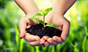 Quyền tạm thời đối với giống cây trồng theo quy định của pháp luật