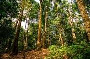 Quyền và trách nhiệm của Ban quản lý, tổ chức được giao quản lý khu bảo tồn
