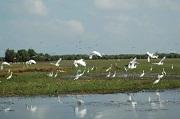 Quyết định thành lập khu bảo tồn cấp quốc gia