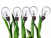 Sửa đổi, bổ sung đơn đăng ký bảo hộ giống cây trồng