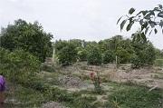 Thời hạn sử dụng đất đối với đất trồng cây hàng năm?