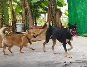 Trách nhiệm của chủ sở hữu khi vật nuôi gây thiệt hại