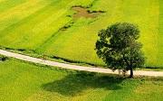 Trồng cây lâu năm trên đất trồng lúa mà không xin phép bị phạt bao nhiêu?