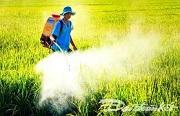 Thu hồi Giấy phép khảo nghiệm thuốc bảo vệ thực vật